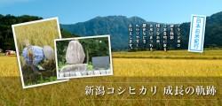 【12月号】 新潟コシヒカリ 成長の軌跡 農業者からも相手にされなかったコシヒカリが、新潟で「米の横綱」として耀きを放つようになったファクター