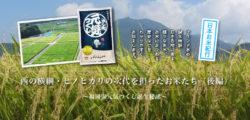 【7月号】 西の横綱・ヒノヒカリの次代を担ったお米たち(後編)~福岡県元気つくし誕生秘話~