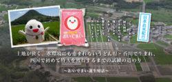 おいでまい誕生秘話 土地が狭く、水環境にも恵まれないうどん県・香川で生まれ、四国で初めて特Aを獲得するまでの試練の道のり