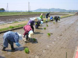試験圃場における田植え風景